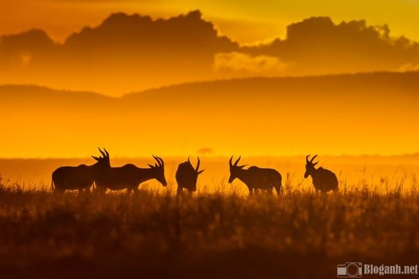 Giờ vàng trong nhiếp ảnh sẽ cho ra ánh sáng màu vàng như thế này