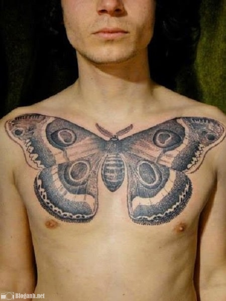 hình xăm đẹp, hình xăm bướm đẹp cho nam