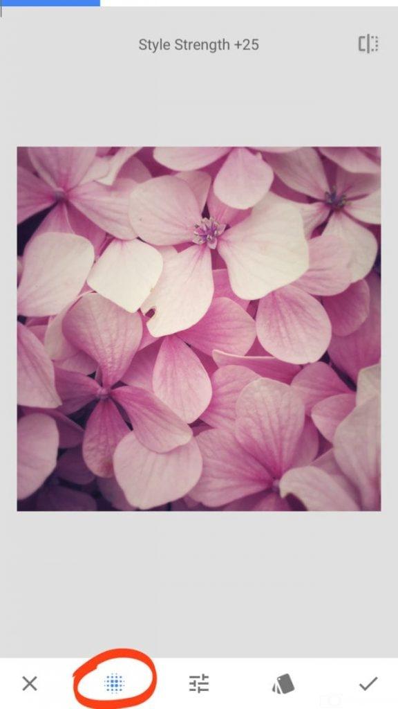 chỉnh ảnh, hoa, ảnh hoa, màu vintage