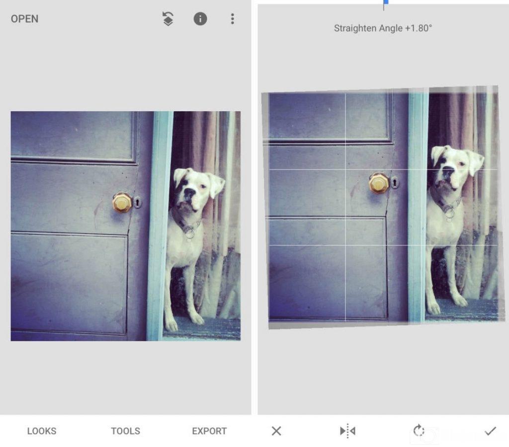 con chó, cánh cửa, góc ảnh lệch