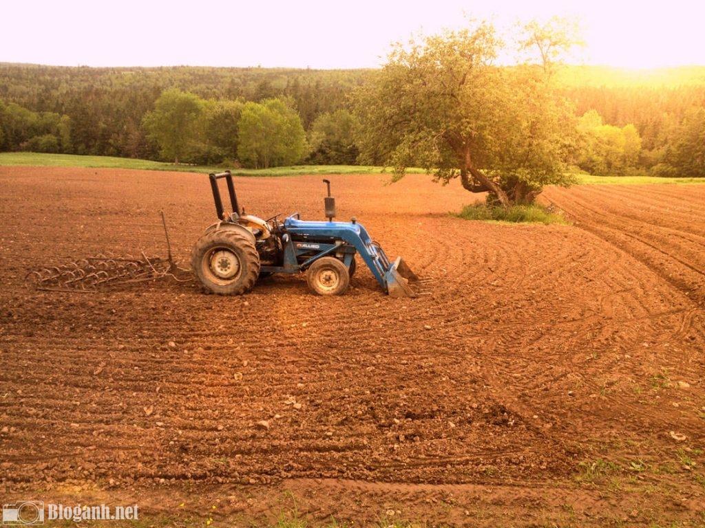 máy kéo, cánh đồng, tone màu ấm