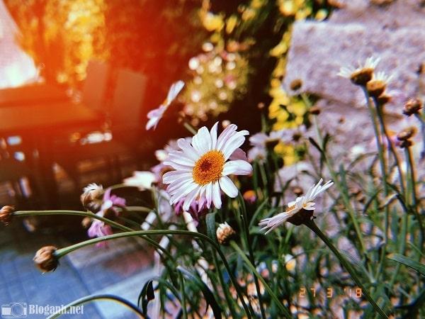 hoa, bộ lọc màu, hình ảnh đẹp