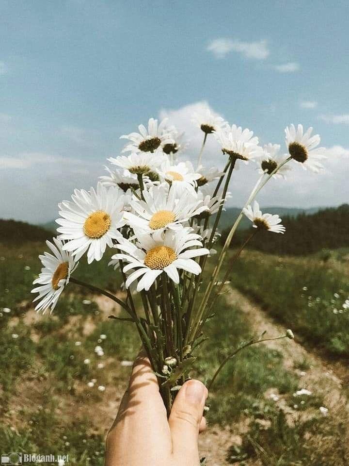 chỉnh ảnh, hoa, tone màu