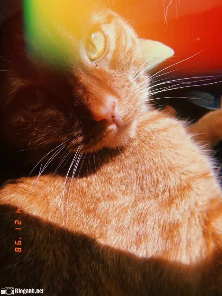 con mèo, tone màu hoài cổ